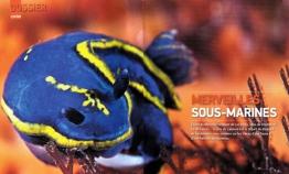 "Pays Basque Magazine ""Merveilles sous-marines"""