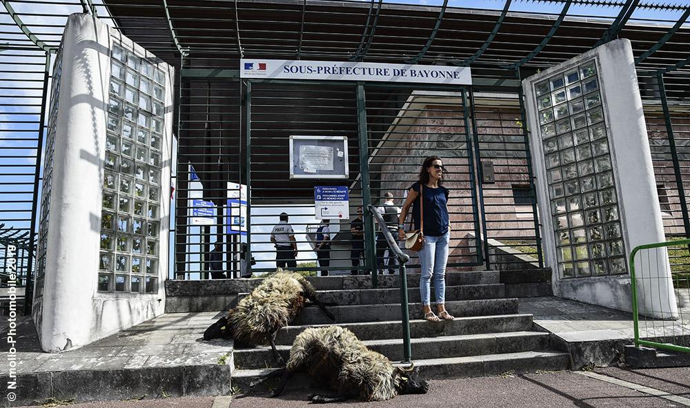 Agriculture : Bayonne Pays basque la colère des bergers et une opération coup de poing devant la sous-préfecture de Bayonne