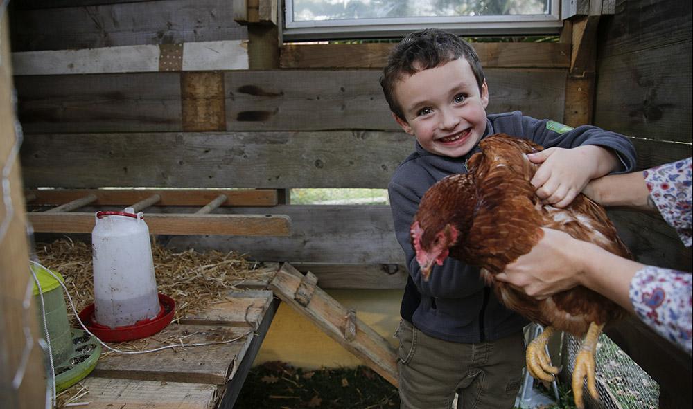 Environnement : A Lahonce au Pays basque, Iban 5 ans va réduire ses déchets ménagers d'environ 300 kilos par an et mangera les œufs de « Cacahouette ».