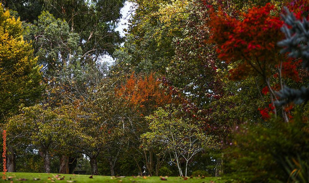 Premier jour d'automne ce lundi 21 septembre, Dame Nature nous offre sa plus belle cuisine. Archives photo parc de la table et Hostellerie des frères Ibarboure à Bidart.
