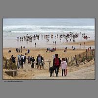 Plage des Sablères ( la plage Nord) de Vieux Boucau.Compétition européenne de surf canin à Vieux Boucau dans les landes organisée par les Toutous Surfeurs, et la clinique vétérinaire Zatozte, à Bidart (64).