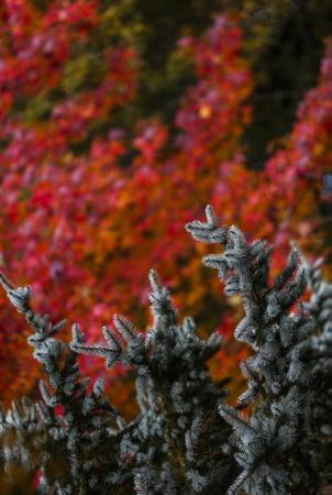 Les frères Ibarboure Table et Hostellerie à Bidart au Pays Basque, le domaine, le parc les arbres et les jardins en automne.  Nouvelle Aquitaine, Pays Basque, Aquitaine, Limousin-Poitou-Charentes. Pyrénées-Atlantiques, Europe, France.