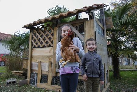 """Le petit IBAN SUZANNE GARAY avec sa poule Cacahouette et sa cousine AMAIA BONNECAZE le jeudi 23 novembre  dans le poulailler construit par son papa dans le cadre de l'opération """"Des poules pour réduire les déchets"""" organisé par la commune de Lahonce qui propose à la population une opération innovante pour la réduction des déchets à domicile de leur production de déchets ménagers avec l'adoption de deux poules offertes par la municipalité. Les poules présentent en effet de nombreux avantages. Elles sont friandes de l'ensemble de nos restes alimentaires et donnent en contrepartie de bons œufs frais toute l'année (entre 200 et 250 œufs par an et par poule) Les couples de poules ont pour mission d'ingurgiter environ 300 kilos de déchets par an, un bénéfice environnemental réel.Avec ce nouveau programme, la commune espère réduire encore la partie biodégradable de ses poubelles en proposant à des foyers volontaires d'accueillir deux poules et un poulailler dans leur jardin.Ce dispositif pourra être reconduit jusqu'en 2018 en fonction des demandes.  Lahonce, Pays basque, Nouvelle Aquitaine, Pyrénées-Atlantiques, Europe, France."""