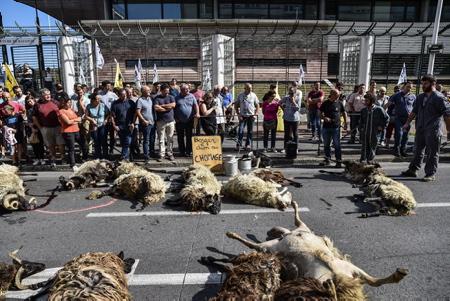 Les bergers en colère ici le 2 septembre 2019, face à une nouvelle attaque d'un ours dans les Pyrénées, prise de paroles et opération brebis avec le dépot devant la sous-préfecture de Bayonne de brebis ont dû être euthanasiées après l'attaque d'un ours dans les Pyrénées, soulevant la colère des éleveurs.Organisé par le syndicat agricole basque ELB (Euskal Herriko Laborarien Batasuna, Confédération paysanne du Pays basque) une cinquantaine de bergers etaient sur devant la sous-prefecture de Bayonne.  The shepherds angry here on September 2, 2019, facing a new attack of a bear in the Pyrenees, taking words and operation sheep with the deposit in front of Bayonne sub-prefecture of sheep had to be euthanized after the attack of 'a bear in the Pyrenees, raising the anger of the breeders.Organized by the Basque agricultural union ELB about fifty shepherds were on the front sub-prefecture of Bayonne.  Bayonne, Pays Basque, Region Nouvelle-Aquitaine, Pyrenees-Atlantiques France, Europe, News-Aquitaine, Basque Country.
