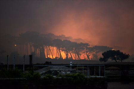 Violent incendie a Anglet au Pays basque (Pyrénées-Atlantiques), le feu a ravagé la forêt de Chiberta, les flammes ont détruit 165 hectares de végétation. Le parquet de Bayonne a ouvert une enquête, l'origine du sinistre n'était toujours pas déterminée.  Violent fire in Anglet in the Basque Country (Pyrénées-Atlantiques), the fire devastated the forest of Chiberta, the flames destroyed 165 hectares of vegetation. The Bayonne public prosecutor's office opened an investigation, the origin of the incident was still not determined.  Anglet, Pays Basque, Nouvelle Aquitaine, New Aquitaine, Basque Country, Pyrénées Atlantiques, Sud Ouest, France, Europe.